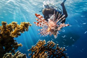Buceo en Mar Rojo arrecife coral