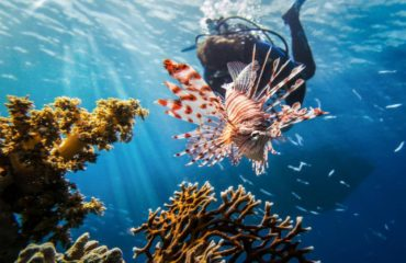 Buceo Mar rojo arrecife