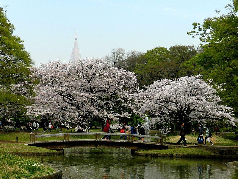 El Parque Yoyogi
