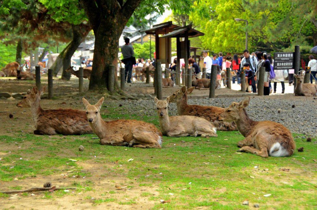 El Parque de Nara