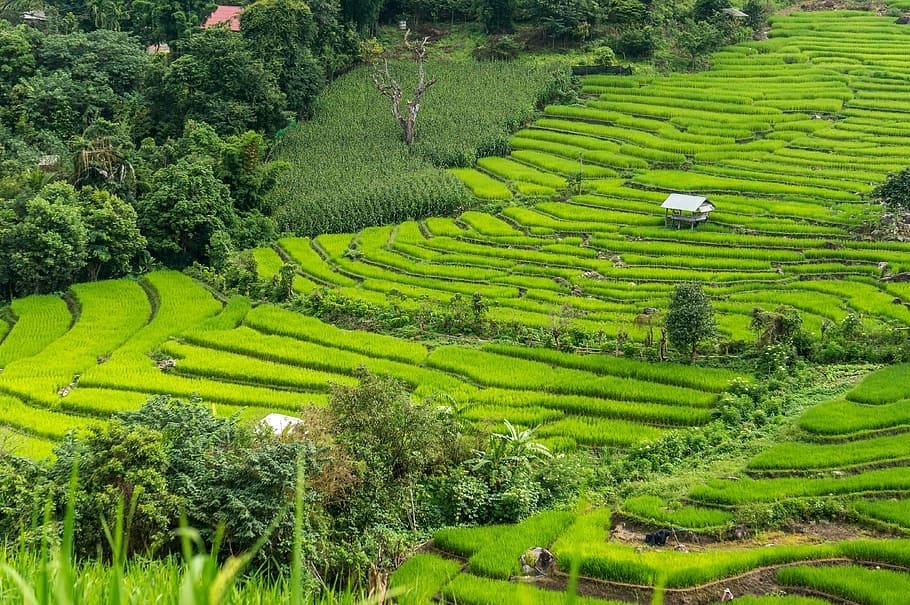 Parque Singha de la Plantación del té