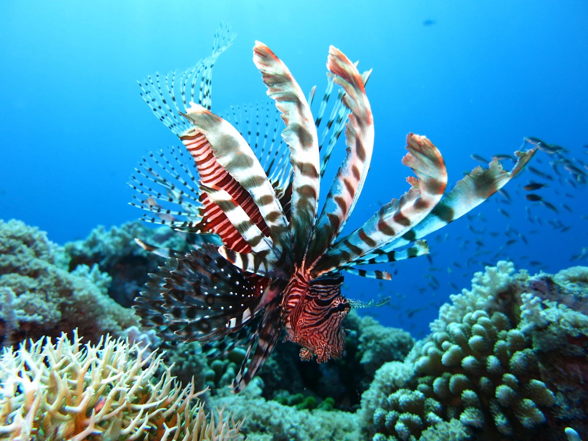 Arrecifes de coral de la Isla de Gem